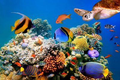 Отличный риф в Египте
